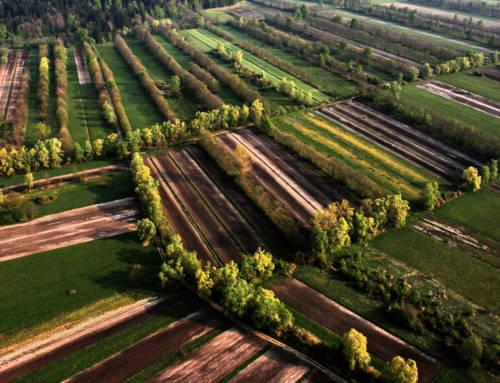 Ljubljana Marshes